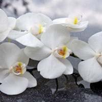 kwiaty-min